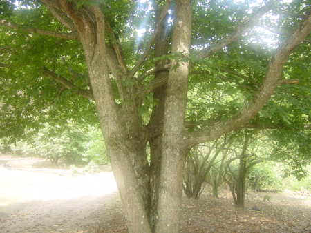 20080901-02.jpg